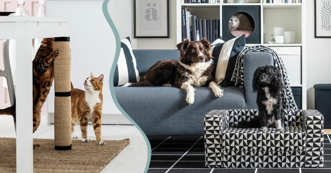 Ikeas kollektion för hundar och katter Lurvig