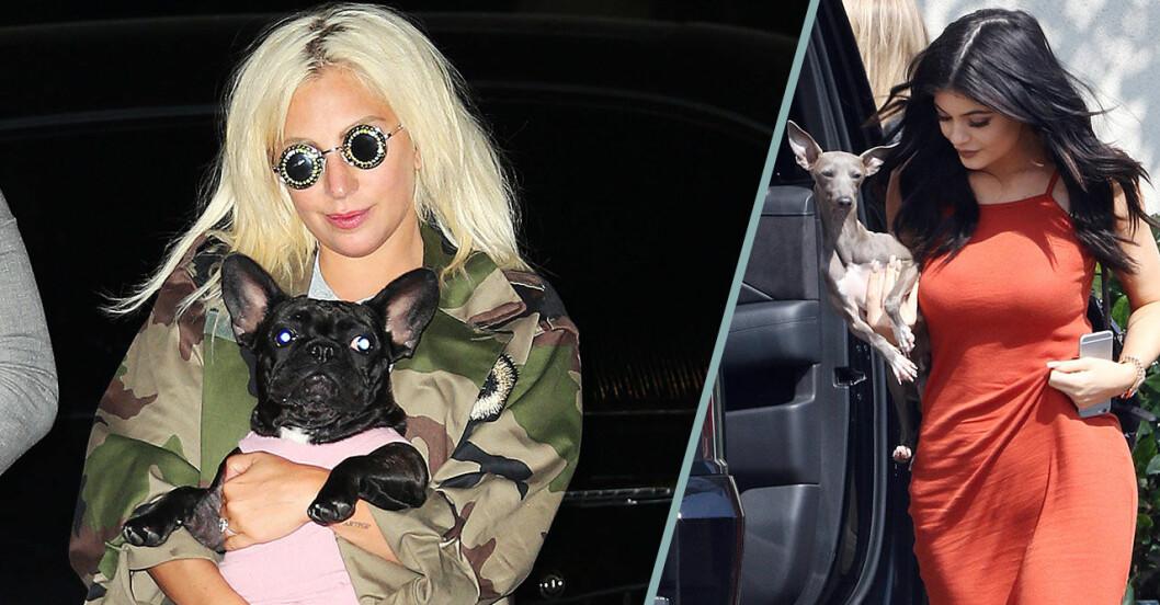 Lady Gaga och Kylie Jenner med sina hundar