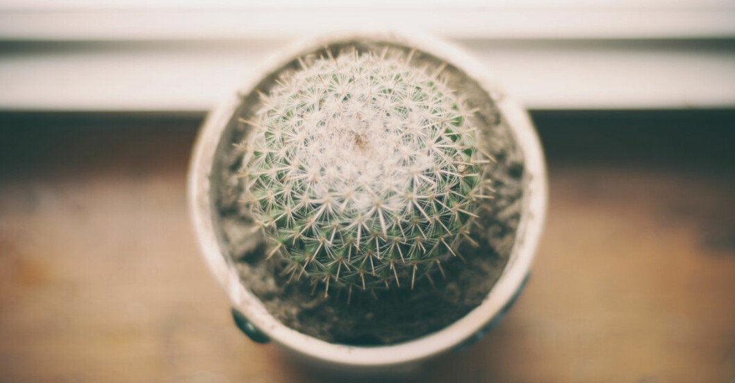 bättre luft inomhus med växter