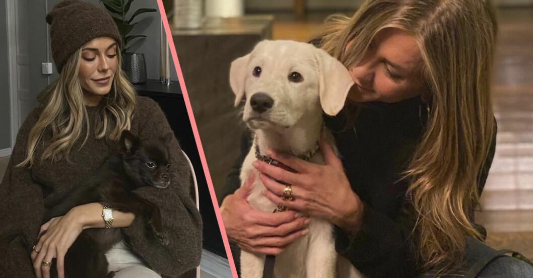 Bianca Ingrosso och Jennifer Aniston med husdjur