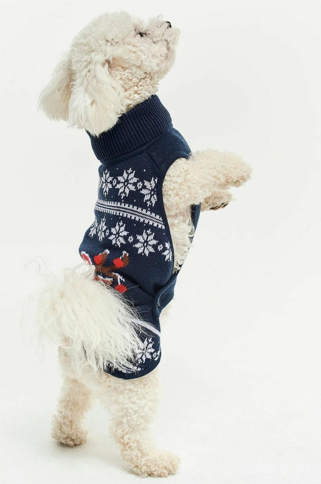 Blå jultröja till hunden inför julen 2019