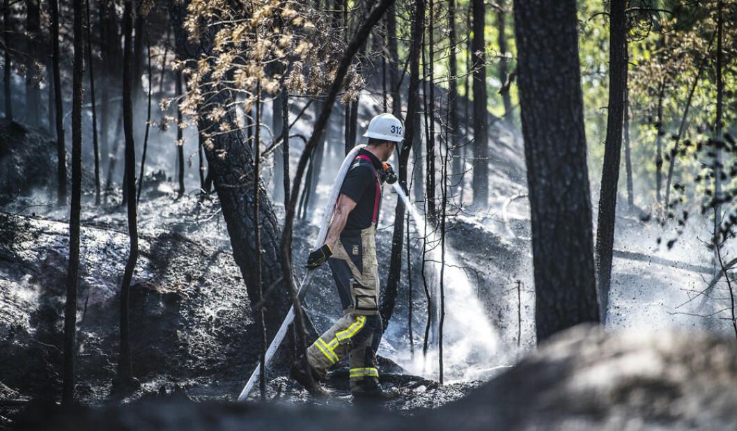 En av alla skogsbränder sommaren 2018.