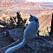 Carla Hagbergs katt Cezar kan vara världens mest beresta katt.