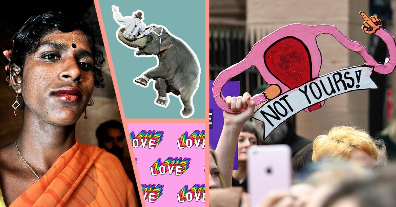 En transperson i Bangladesh, en cirkuselefant och en som protesterar mot abortlagar i Nya Zeeland.
