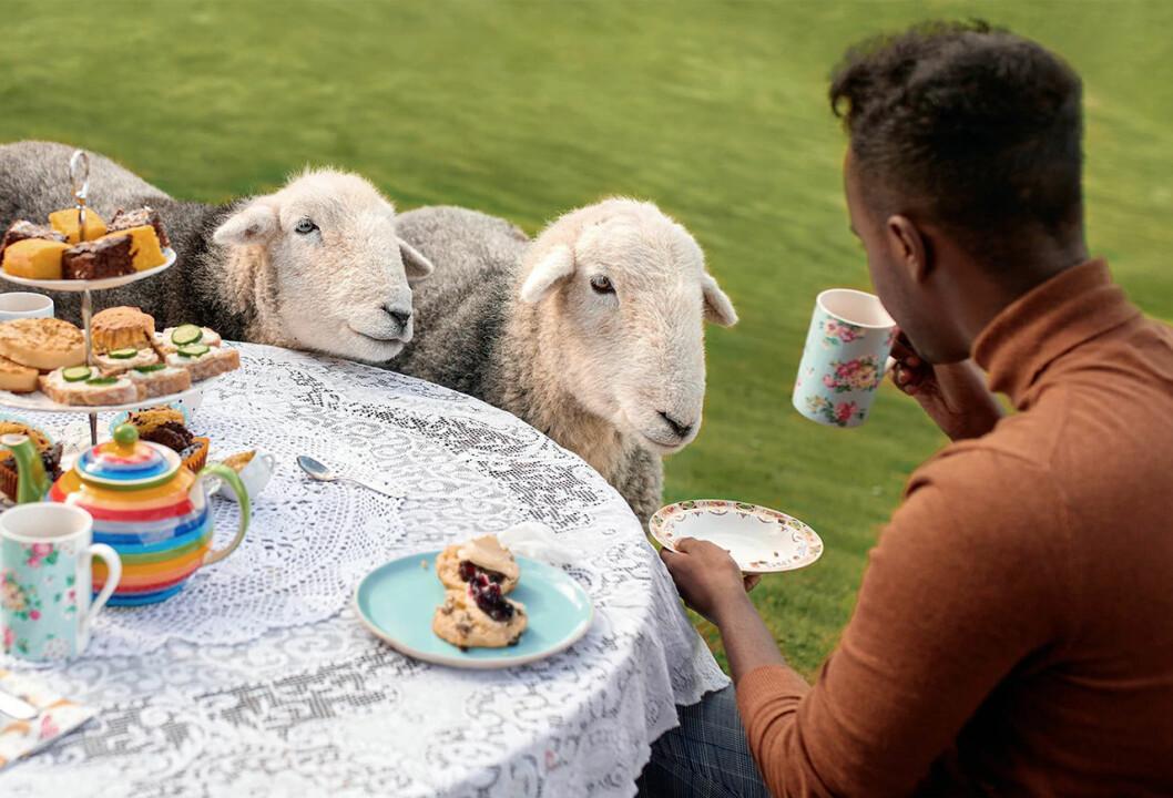 Afternoon tea med får i Skottland – en upplevelse på Airbnb