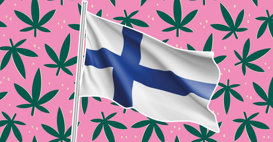 Finlands flagga mot en rosa bakgrund med marijuanablad och cannabis.
