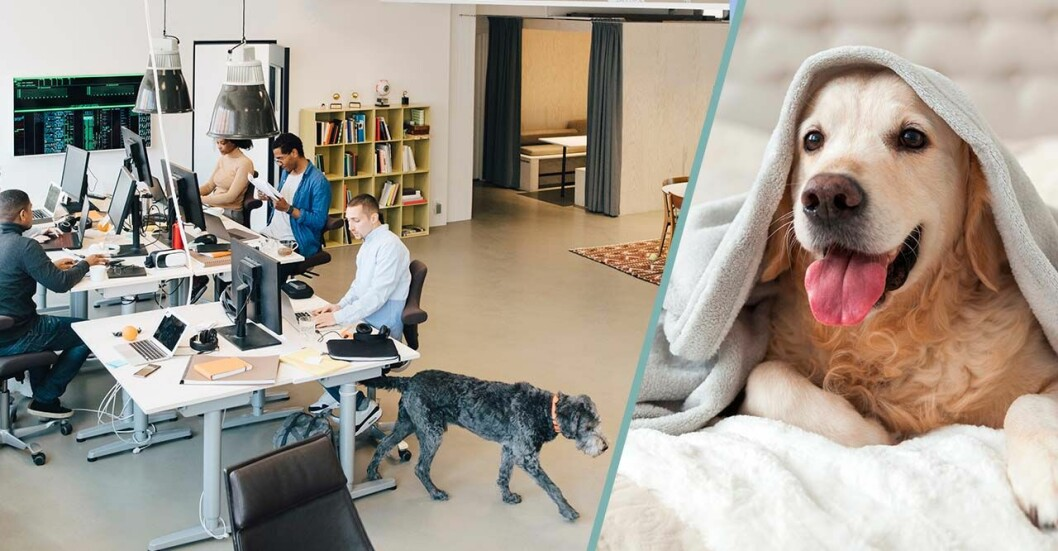 Hund på kontor