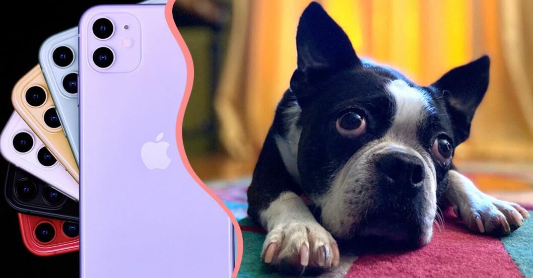 Ett husdjur i form av en hund och en Iphone 11 med kamera.