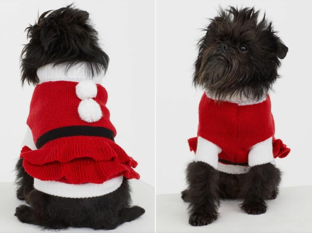 Jultröja som föreställer en tomtedräkt till hunden inför julen 2019