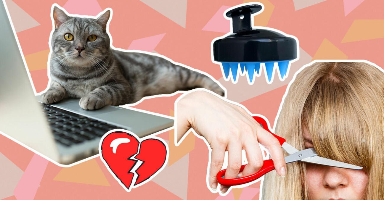 Katt, No Flaky, lugg och trasiga relationer är alla konsekvenser av pandemin covid-19.