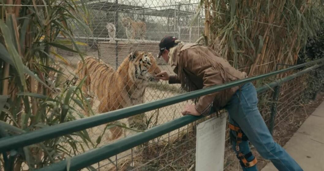 Skadat ben Tiger King