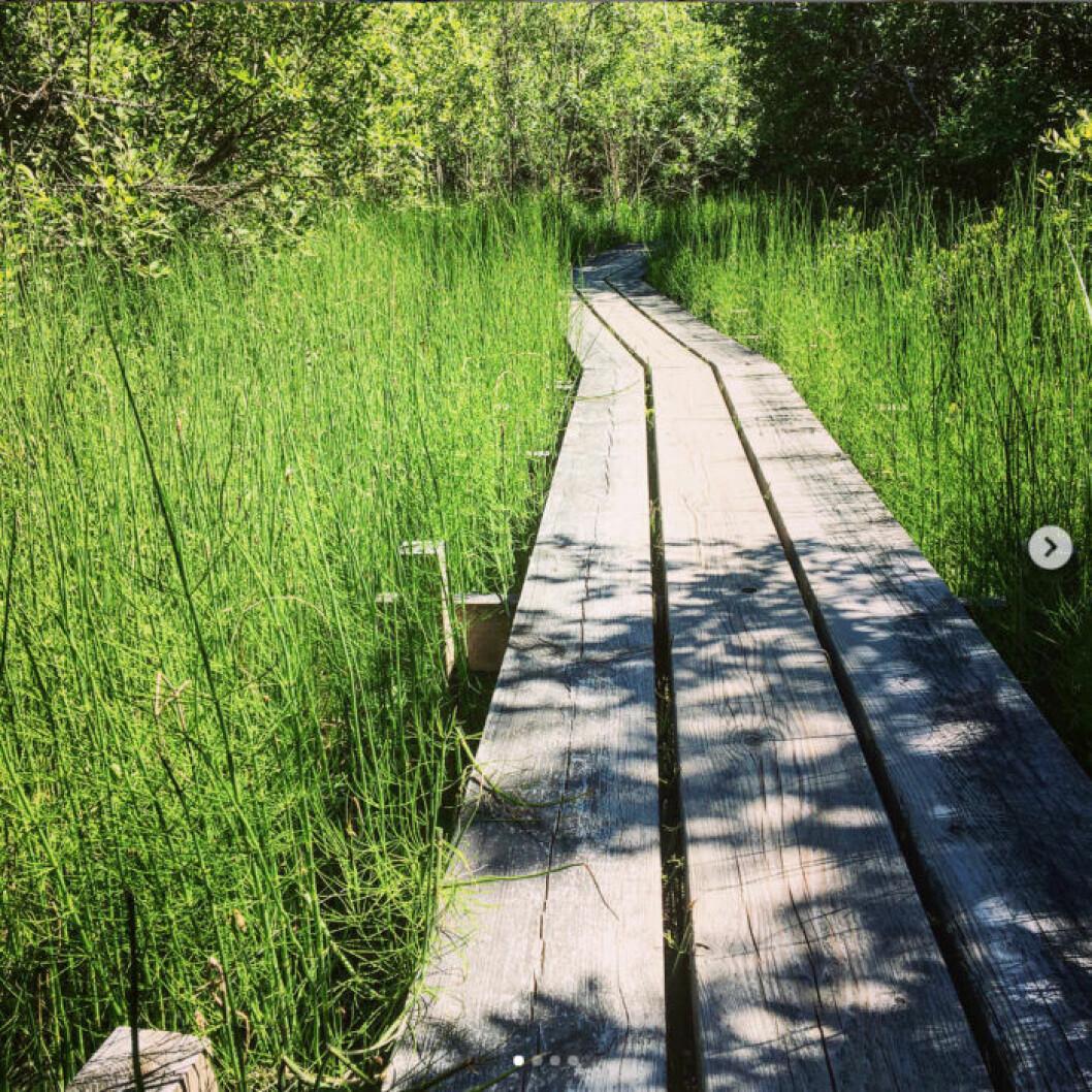 Lida Naturreservat. Foto: Mikaela Alex