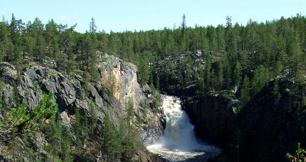 Muddusfallet i Lappland.
