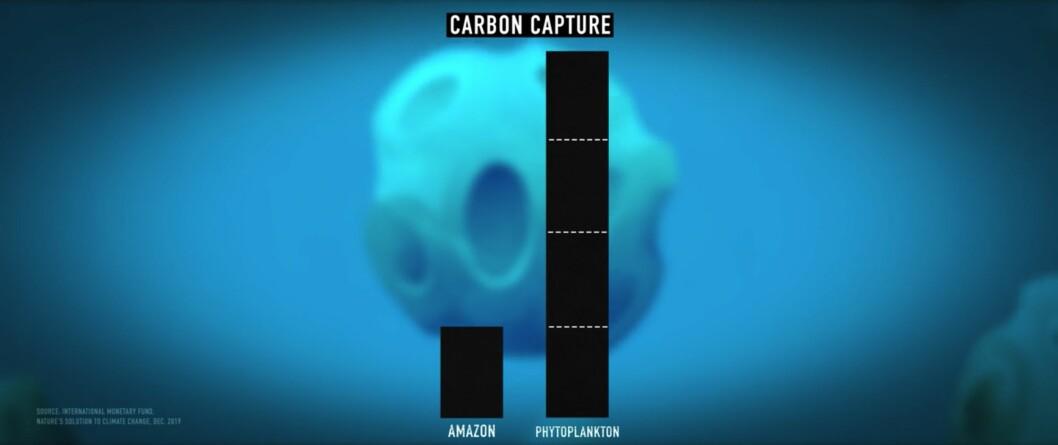 Fytoplankton absorberar mer koldioxid än Amazonas regnskogar.