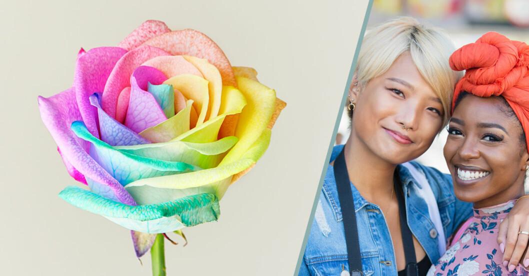 Så gör du en regnbågsfärgad Pride-ros (och här kan du köpa en)