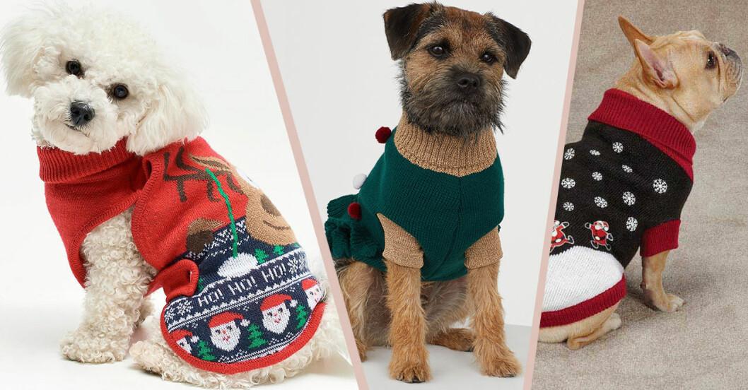 Roliga jultröjor för hundar och katter till julen 2019