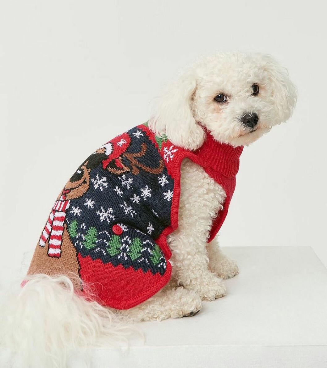 Rolig jultröja för hunden till julen 2019