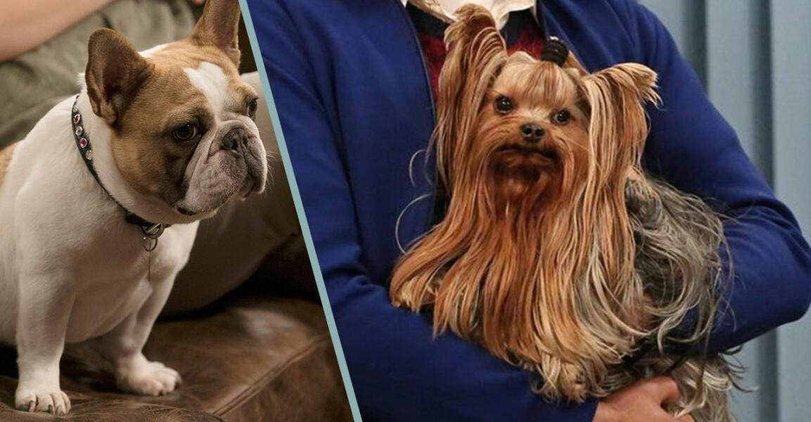 Hunden i Modern Family och The Big Bang Theory