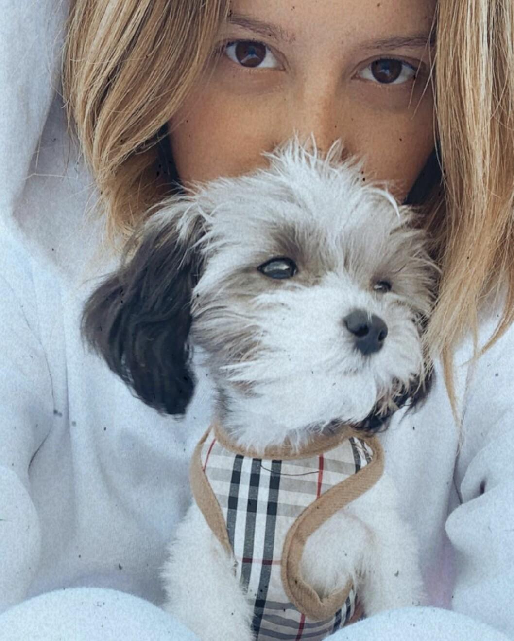 Ashley Tisdale hund