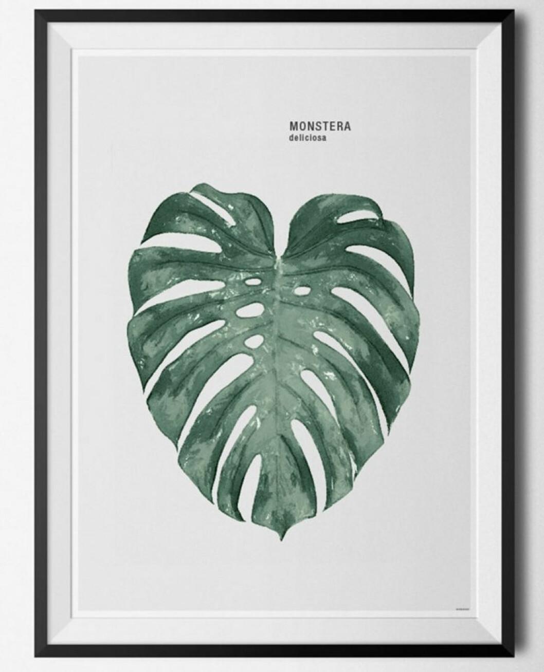 tavla med planta