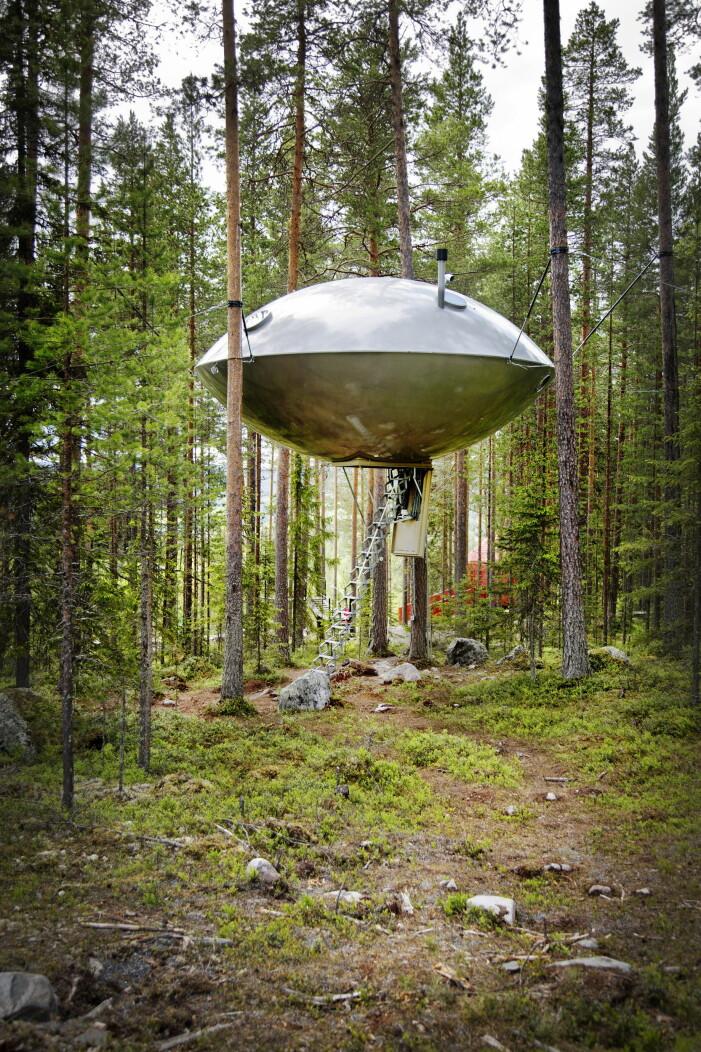 Ufo som hänger i träd