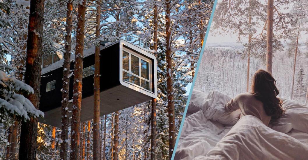 Treehotel – Ett hotell med träkojor i Sverige