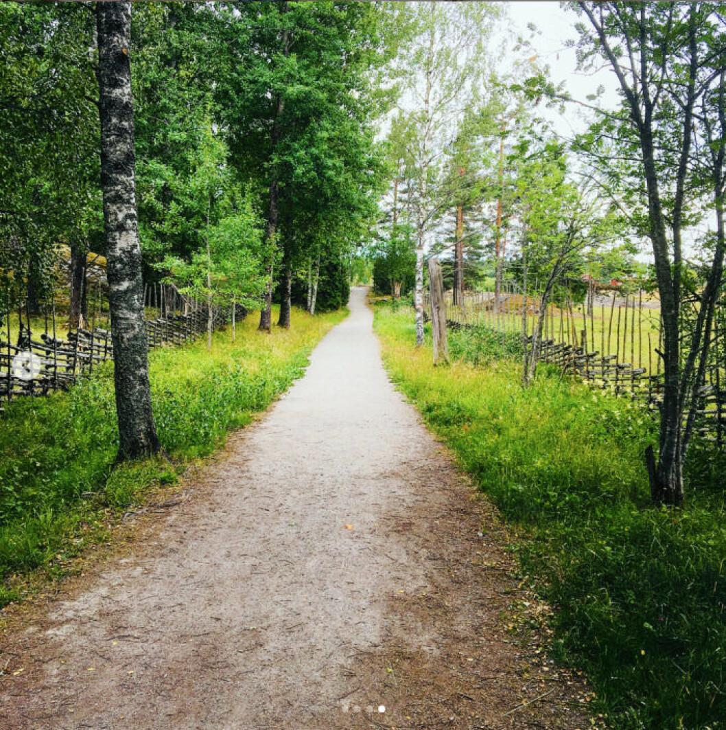 Tyresta nationalpark, vandring i Stockholm. Foto Mikaela Alex