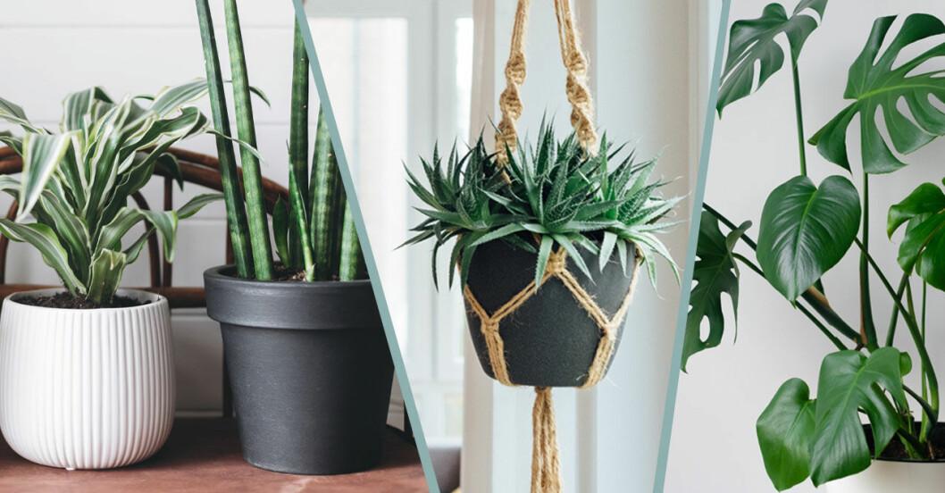 Quiz om växter